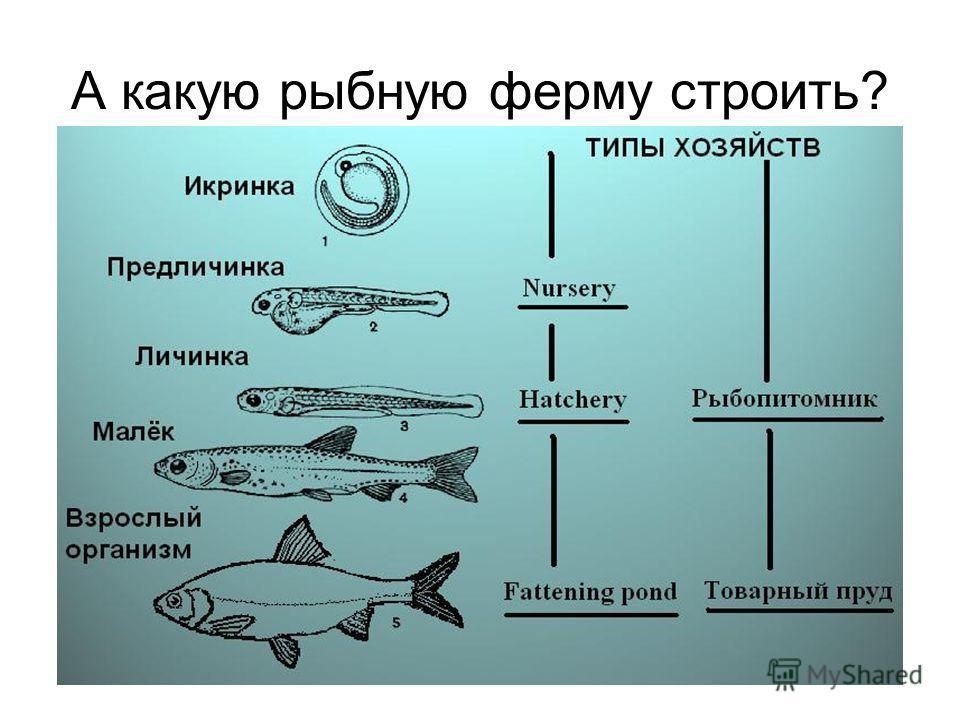 А какую рыбную ферму строить?