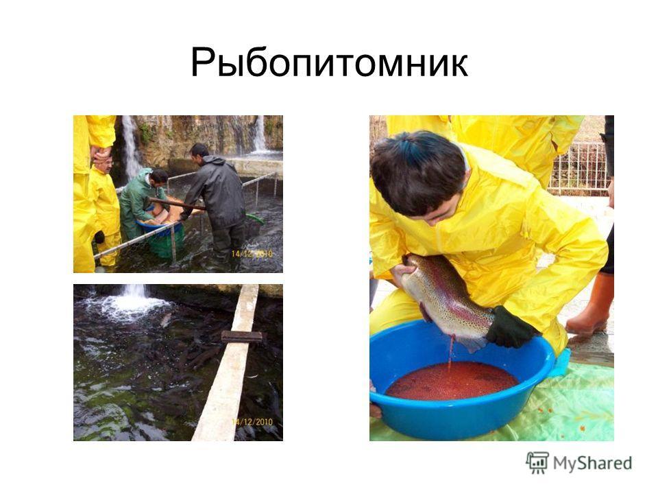 Рыбопитомник