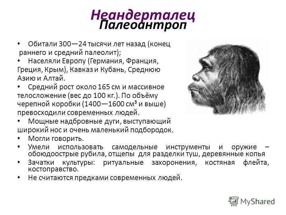 Неандерталец Палеоантроп Обитали 30024 тысячи лет назад (конец раннего и средний палеолит); Населяли Европу (Германия, Франция, Греция, Крым), Кавказ и Кубань, Среднюю Азию и Алтай. Средний рост около 165 см и массивное телосложение (вес до 100 кг.).
