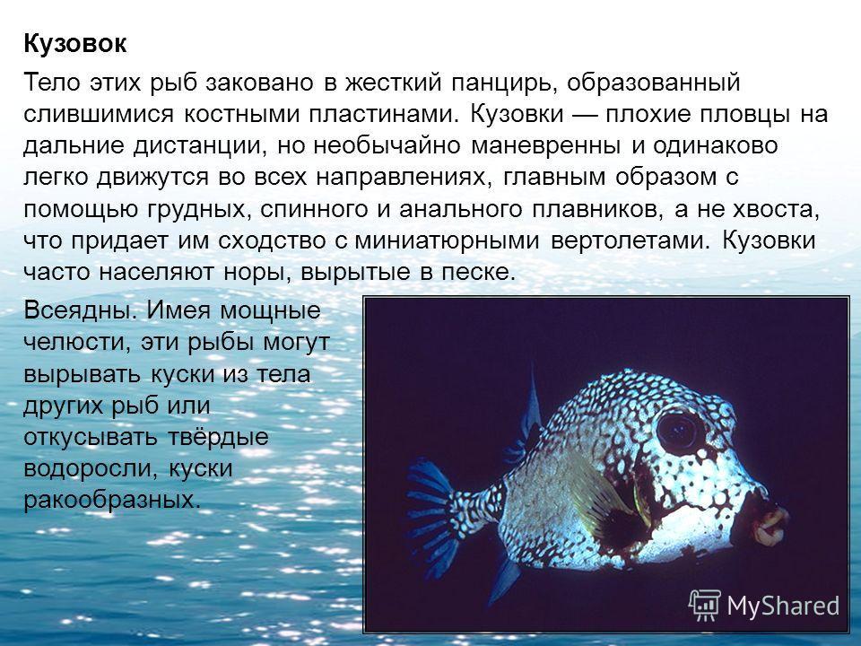 Рыба-клоун Она живет в симбиозе с актиниями, смертельно опасными для других рыб. От яда стрекательных клеток актинии их защищает кожная слизь. Польза такого сожительства для рыб-клоунов очевидна эффективная защита от хищников, что же касается выгоды