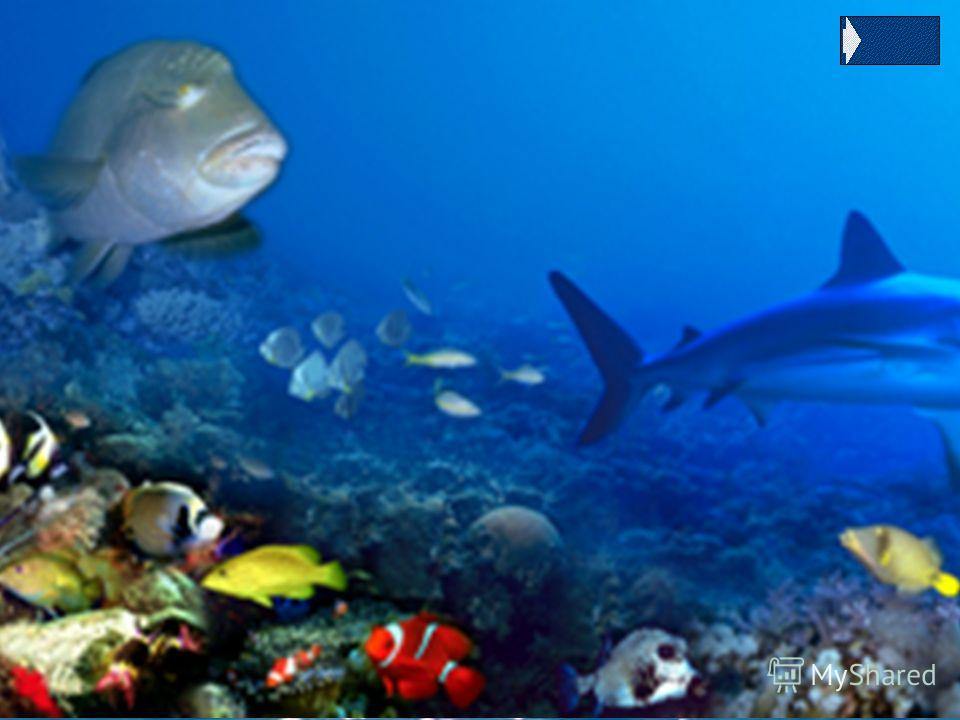 Спинорог Эти красивые рифовые рыбы, живут в норах. Их название связано с тем, что первая колючка первого спинного плавника этих рыб необычайно прочная, напоминает своеобразный рог и фиксируется в вертикальном положение с помощью второй колючки. Наход