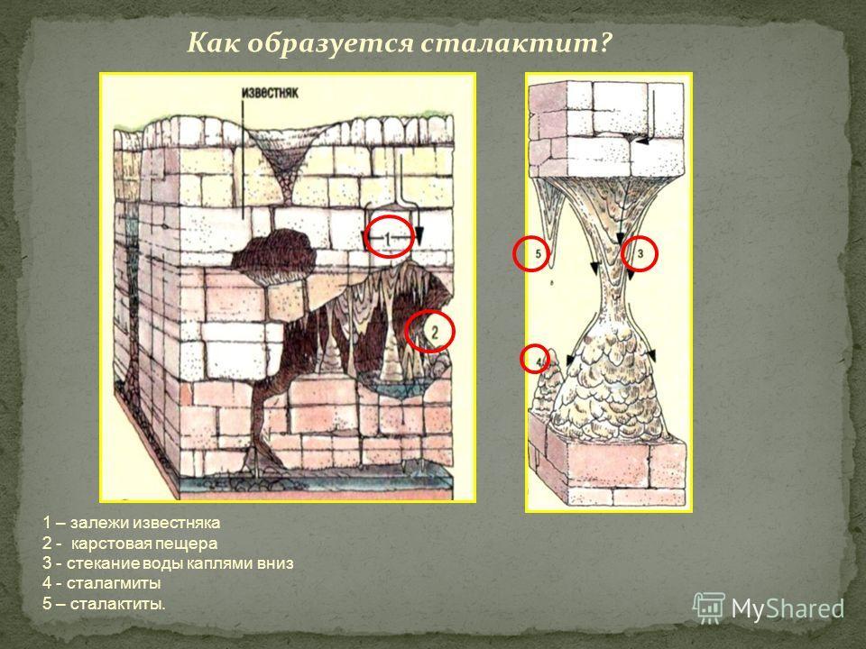 Как образуется сталактит? 1 – залежи известняка 2 - карстовая пещера 3 - стекание воды каплями вниз 4 - сталагмиты 5 – сталактиты.