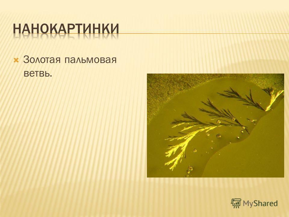 Золотая пальмовая ветвь.