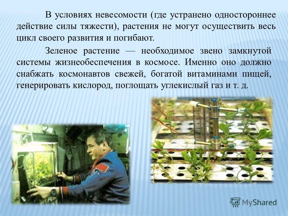 В условиях невесомости (где устранено одностороннее действие силы тяжести), растения не могут осуществить весь цикл своего развития и погибают. Зеленое растение необходимое звено замкнутой системы жизнеобеспечения в космосе. Именно оно должно снабжат