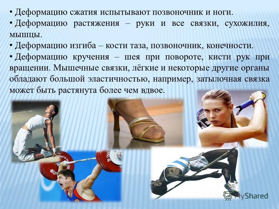 Деформацию сжатия испытывают позвоночник и ноги. Деформацию растяжения – руки и все связки, сухожилия, мышцы. Деформацию изгиба – кости таза, позвоночник, конечности. Деформацию кручения – шея при повороте, кисти рук при вращении. Мышечные связки, лё