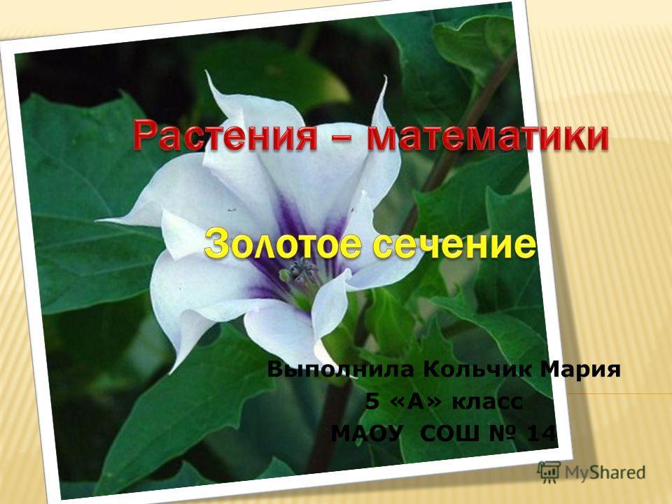 Выполнила Кольчик Мария 5 «А» класс МАОУ СОШ 14