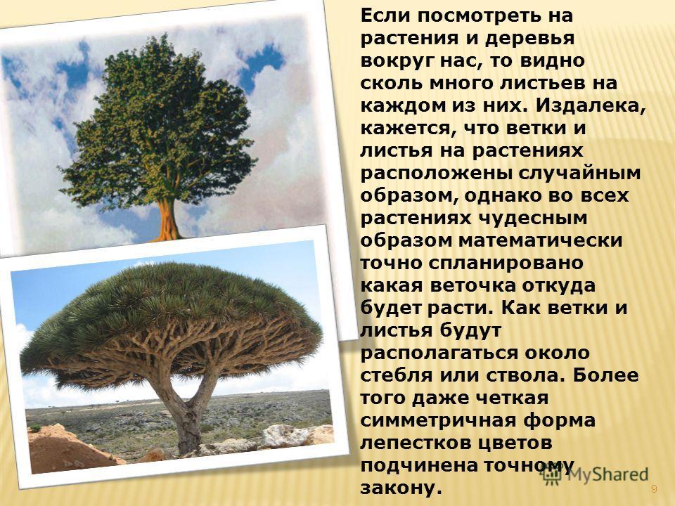 Если посмотреть на растения и деревья вокруг нас, то видно сколь много листьев на каждом из них. Издалека, кажется, что ветки и листья на растениях расположены случайным образом, однако во всех растениях чудесным образом математически точно спланиров