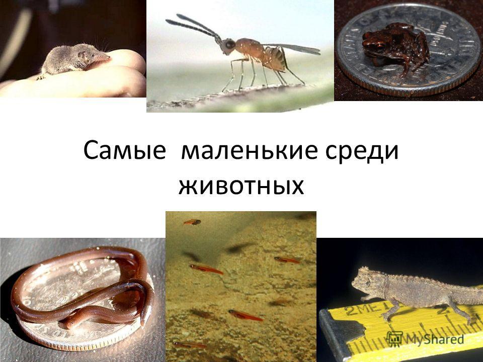 Самые маленькие среди животных