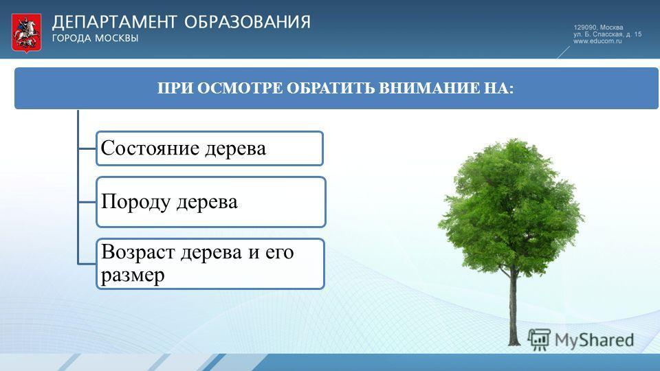 ПРИ ОСМОТРЕ ОБРАТИТЬ ВНИМАНИЕ НА: Состояние дерева Возраст дерева и его размер Породу дерева