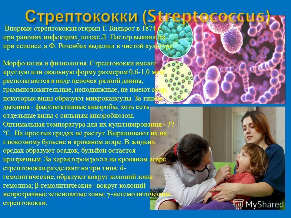 Впервые стрептококки открыл Т. Бильрот в 1874 г. при ранових инфекциях, позже Л. Пастер выявил их при сепсисе, а Ф. Розенбах выделил в чистой культуре. Морфология и физиология. Стрептококки имеют круглую или овальную форму размером 0,6-1,0 мкм распол