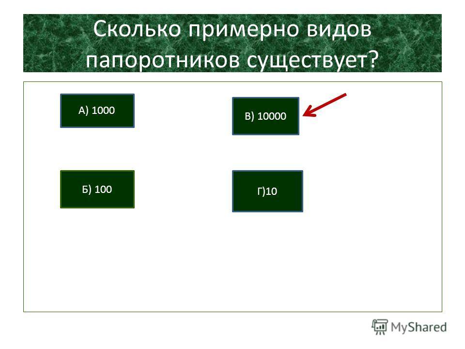 Сколько примерно видов папоротников существует? А) 1000 Б) 100 В) 10000 Г)10