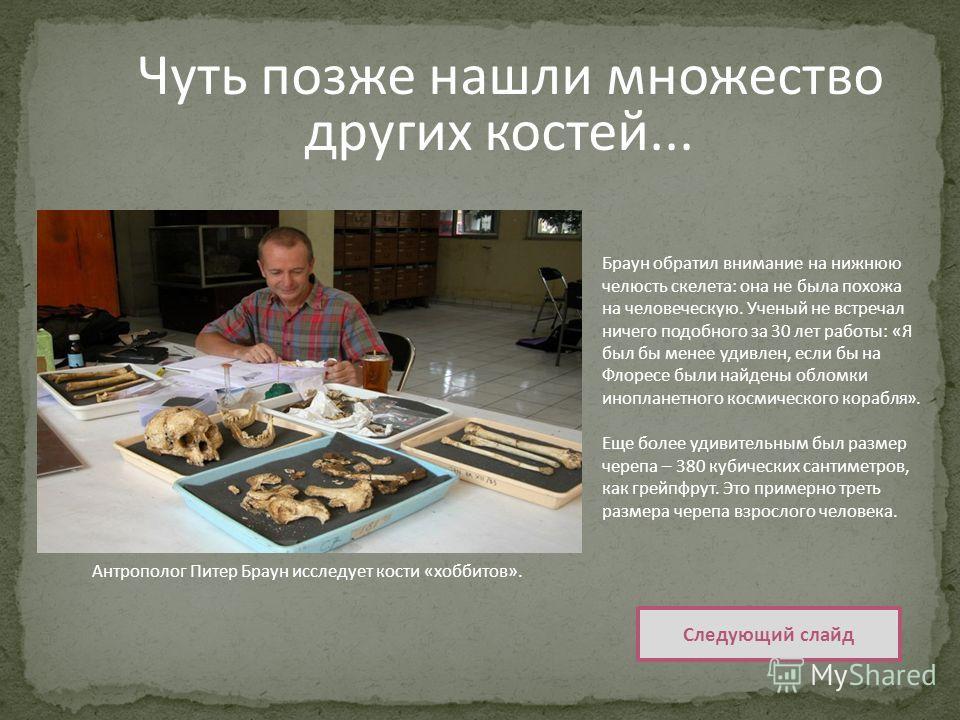 Чуть позже нашли множество других костей... Следующий слайд Антрополог Питер Браун исследует кости « хоббитов ».. Браун обратил внимание на нижнюю челюсть скелета : она не была похожа на человеческую. Ученый не встречал ничего подобного за 30 лет раб