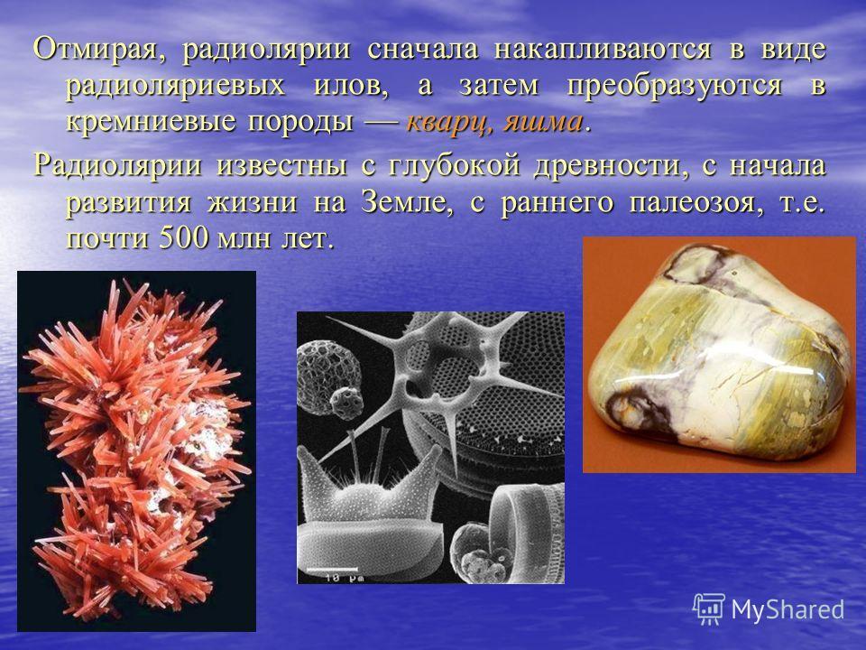 Отмирая, радиолярии сначала накапливаются в виде радиоляриевых илов, а затем преобразуются в кремниевые породы кварц, яшма. Радиолярии известны с глубокой древности, с начала развития жизни на Земле, с раннего палеозоя, т.е. почти 500 млн лет.