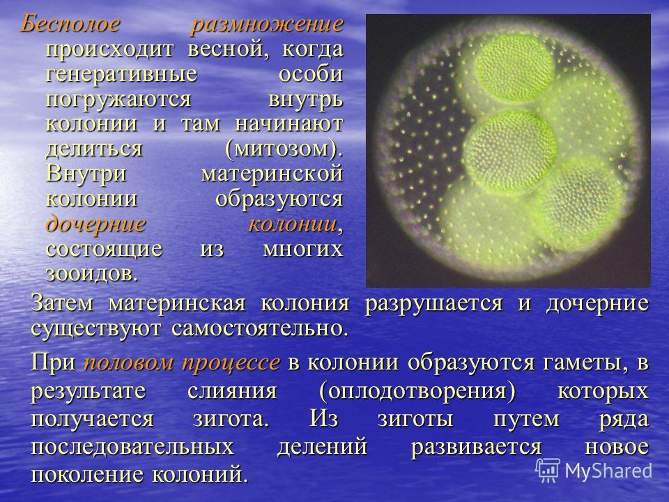 лекарство от запаха изо рта в аптеке