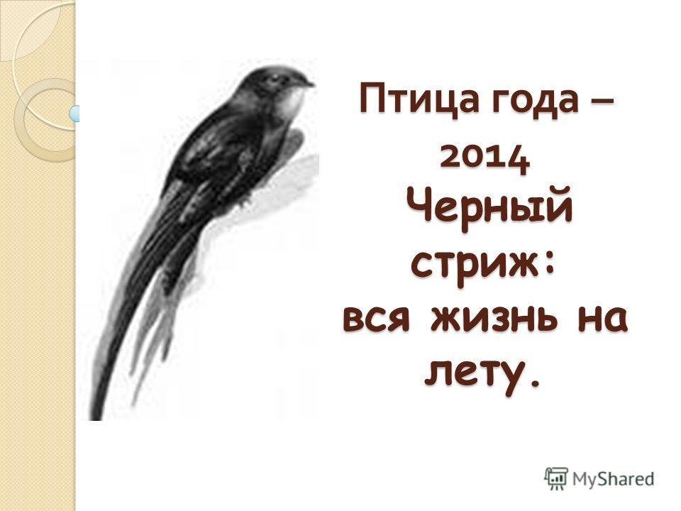 Птица года – 2014 Черный стриж: вся жизнь на лету.