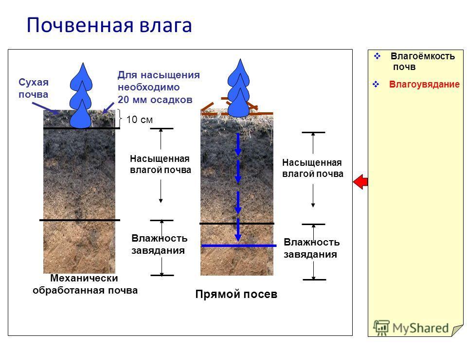 Почвенная влага Влагоёмкость почв Влагоувядание Влажность завядания Насыщенная влагой почва Сухая почва Для насыщения необходимо 20 мм осадков Механически обработанная почва Прямой посев Влажность завядания Насыщенная влагой почва 10 см