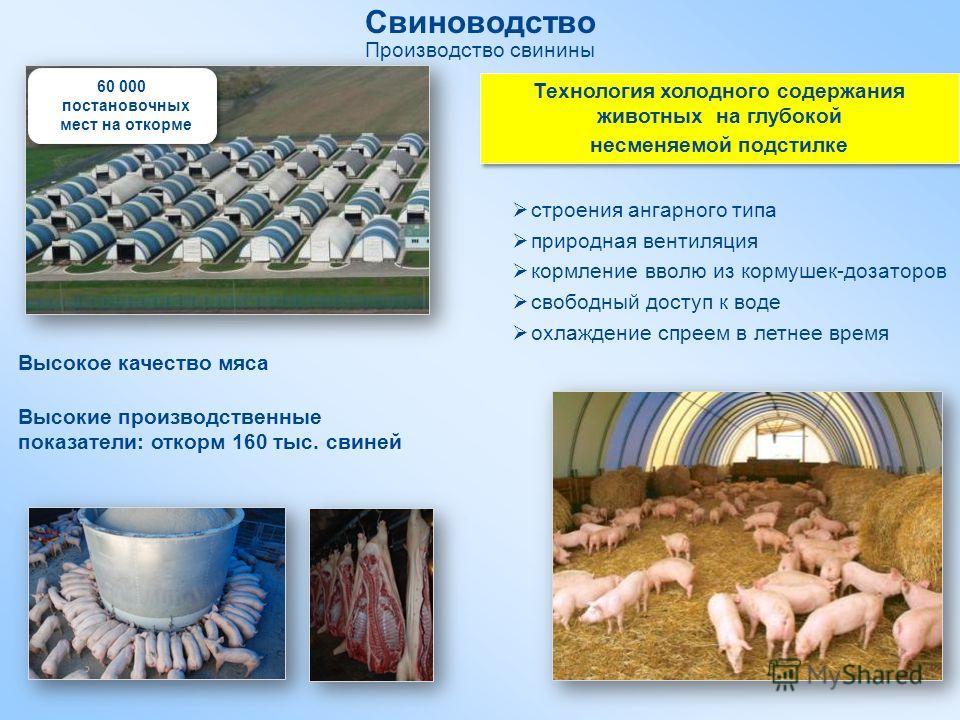 Свиноводство Производство свинины Технология холодного содержания животных на глубокой несменяемой подстилке Технология холодного содержания животных на глубокой несменяемой подстилке строения ангарного типа природная вентиляция кормление вволю из ко