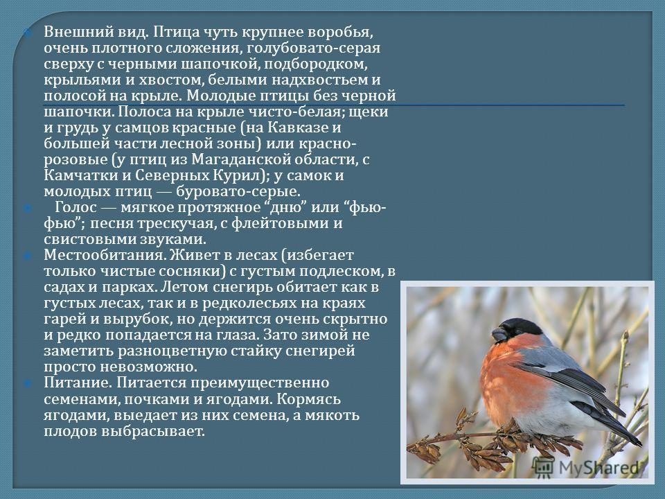 Внешний вид. Птица чуть крупнее воробья, очень плотного сложения, голубовато - серая сверху с черными шапочкой, подбородком, крыльями и хвостом, белыми надхвостьем и полосой на крыле. Молодые птицы без черной шапочки. Полоса на крыле чисто - белая ;