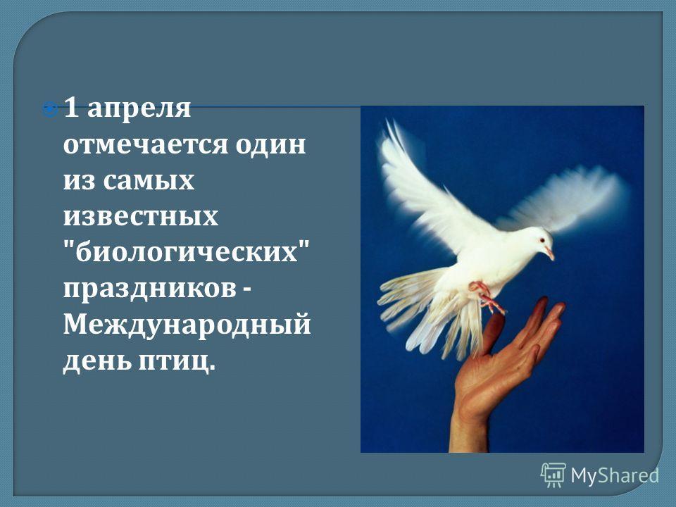 1 апреля отмечается один из самых известных  биологических  праздников - Международный день птиц.