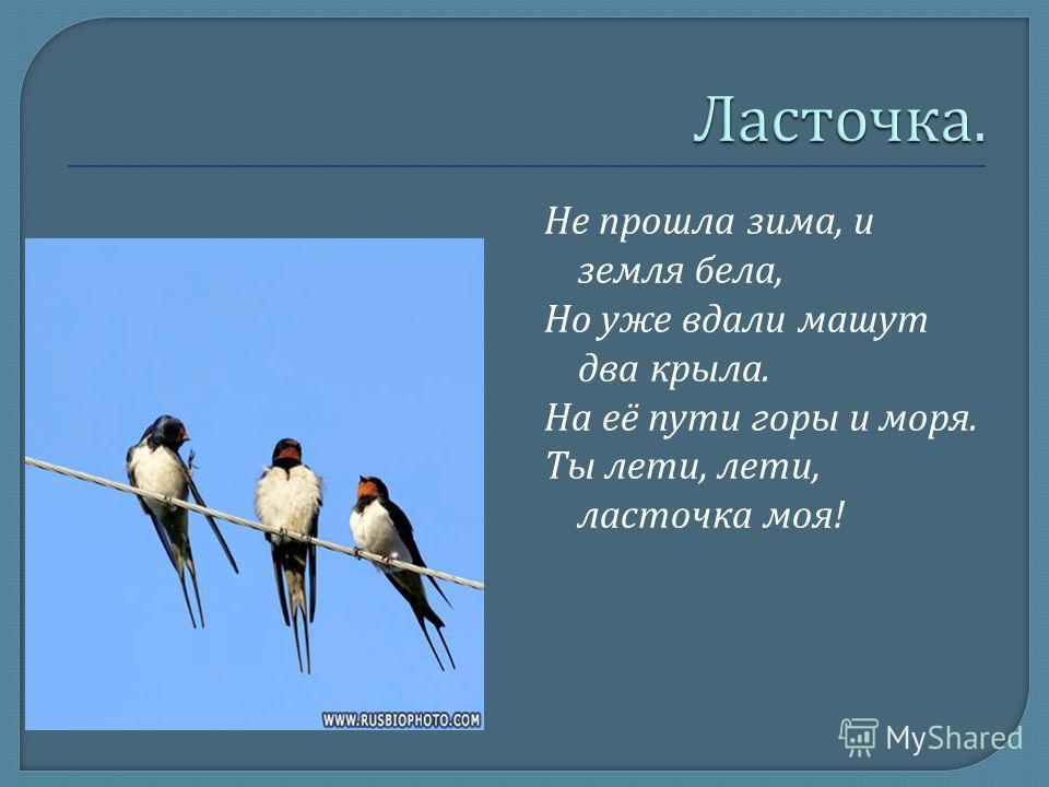 Не прошла зима, и земля бела, Но уже вдали машут два крыла. На её пути горы и моря. Ты лети, лети, ласточка моя !