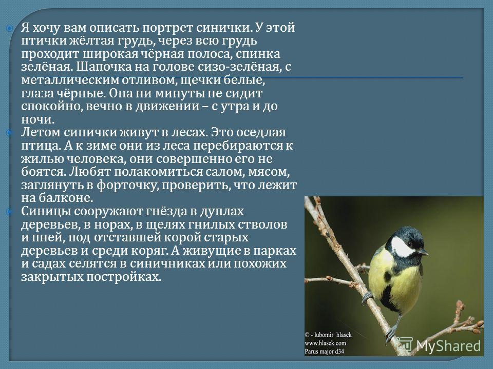 Я хочу вам описать портрет синички. У этой птички жёлтая грудь, через всю грудь проходит широкая чёрная полоса, спинка зелёная. Шапочка на голове сизо - зелёная, с металлическим отливом, щечки белые, глаза чёрные. Она ни минуты не сидит спокойно, веч