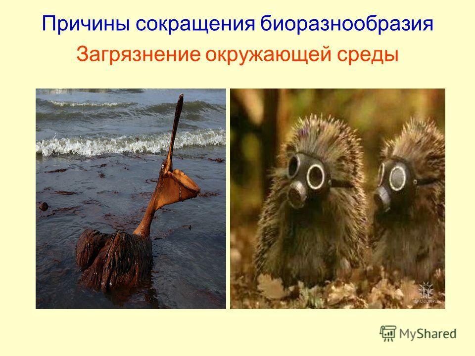 Причины сокращения биоразнообразия Загрязнение окружающей среды