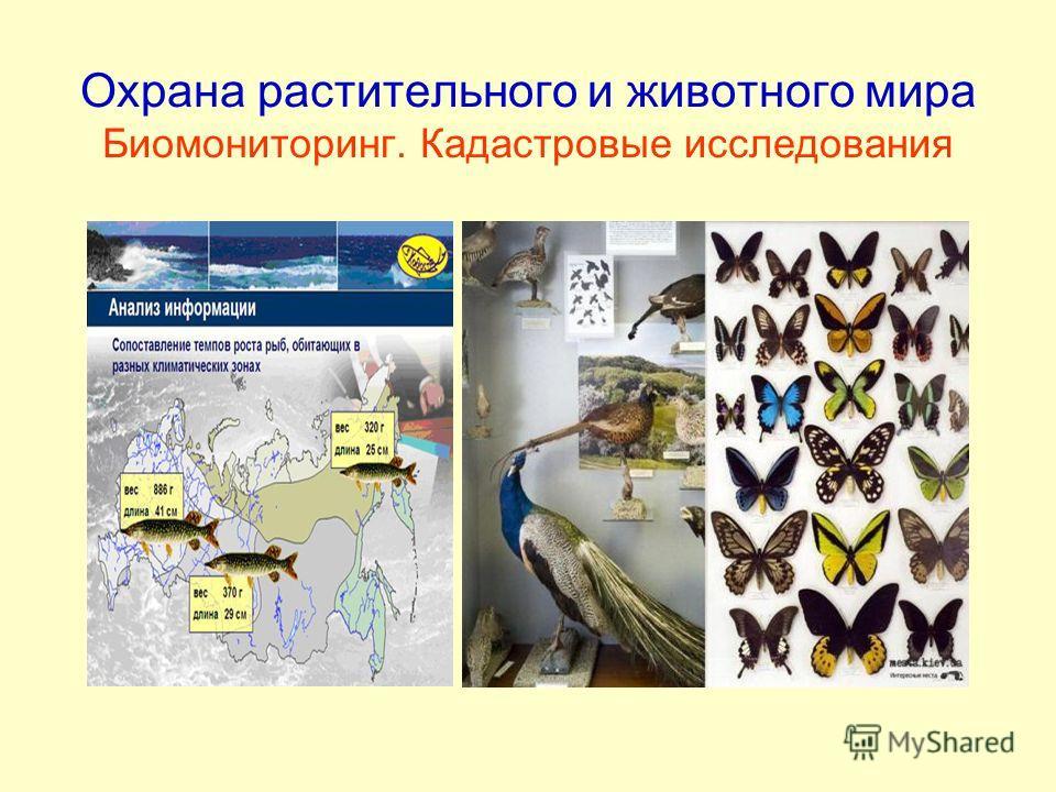 Охрана растительного и животного мира Биомониторинг. Кадастровые исследования