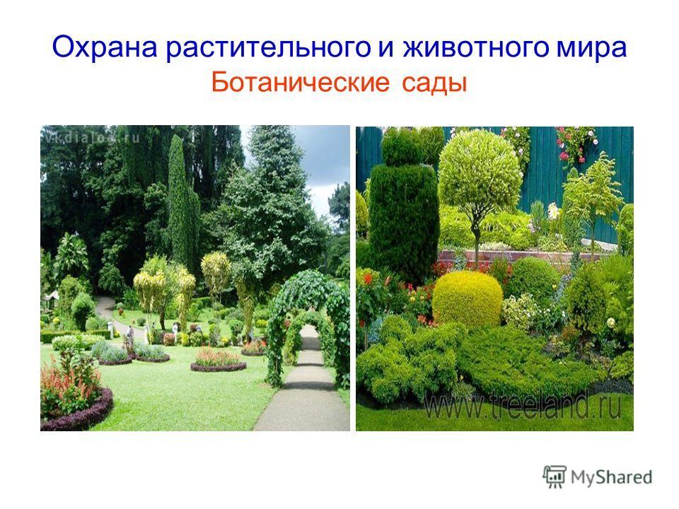 Охрана растительного и животного мира Ботанические сады