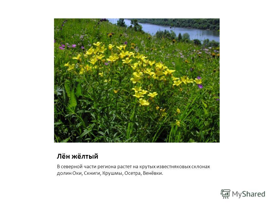 Лён жёлтый В северной части региона растет на крутых известняковых склонах долин Оки, Скниги, Крушмы, Осетра, Венёвки.