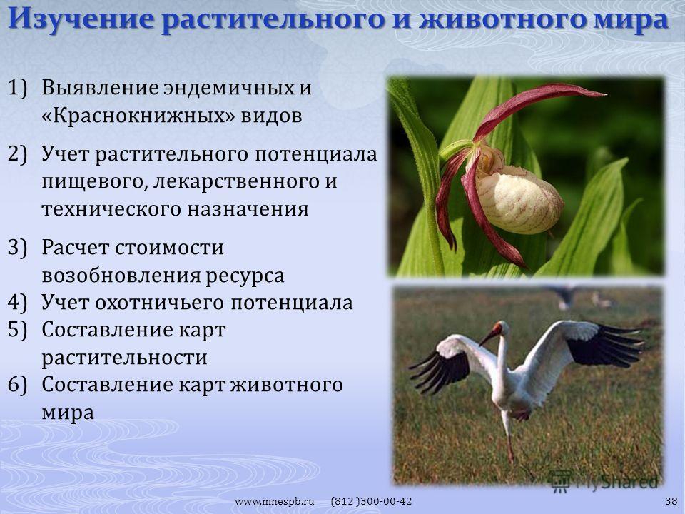 Изучение растительного и животного мира www.mnespb.ru (812 )300-00-42 1)Выявление эндемичных и «Краснокнижных» видов 2)Учет растительного потенциала пищевого, лекарственного и технического назначения 3)Расчет стоимости возобновления ресурса 4)Учет ох