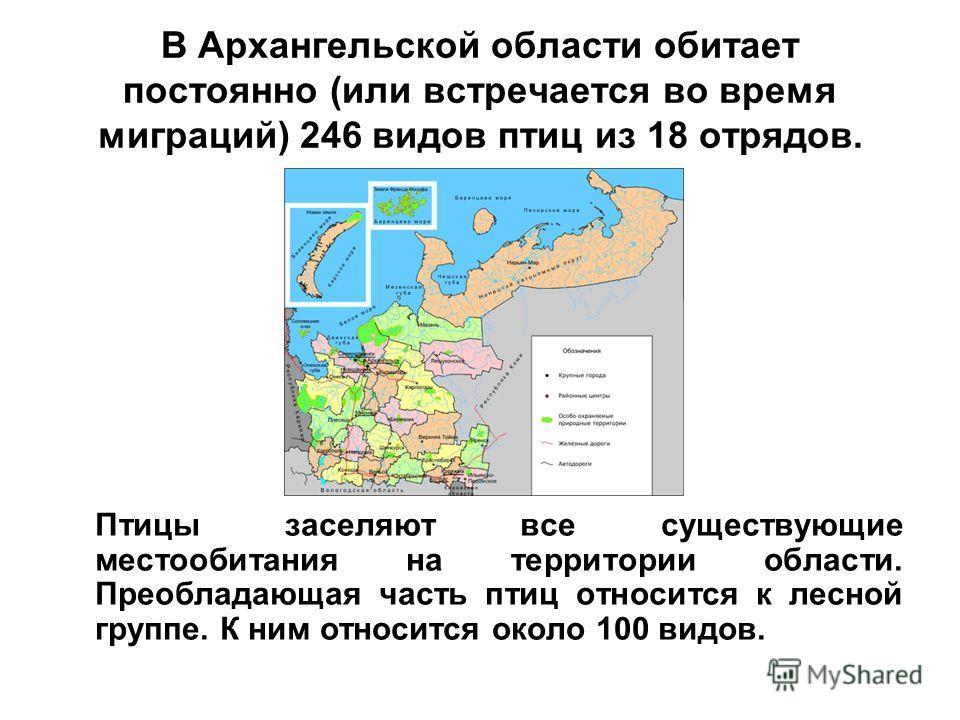 В Архангельской области обитает постоянно (или встречается во время миграций) 246 видов птиц из 18 отрядов. Птицы заселяют все существующие местообитания на территории области. Преобладающая часть птиц относится к лесной группе. К ним относится около
