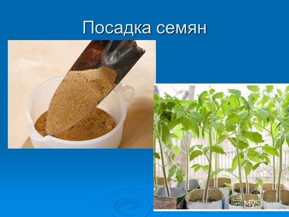 Посадка семян