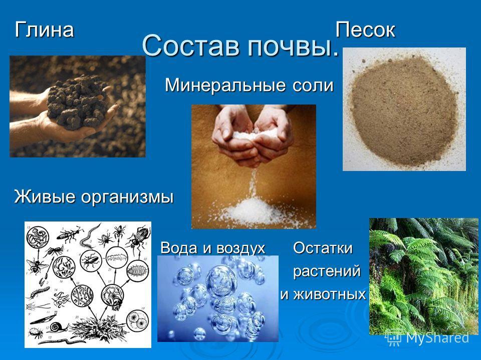 Состав почвы. Глина Песок Минеральные соли Минеральные соли Живые организмы Вода и воздух Остатки Вода и воздух Остатки растений растений и животных и животных