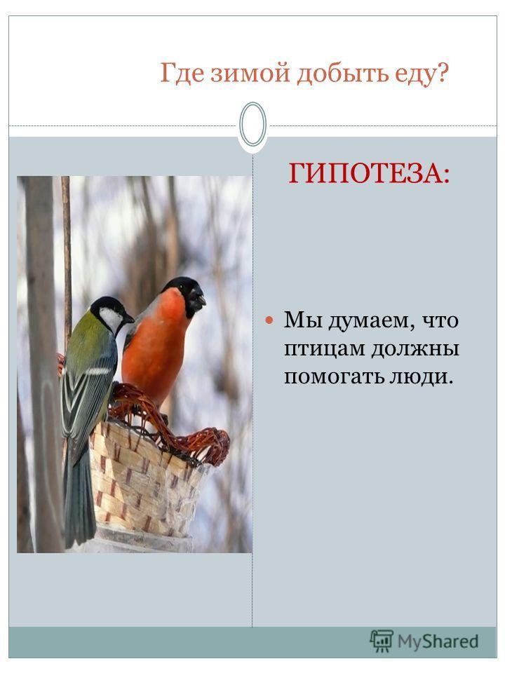 Где зимой добыть еду? ГИПОТЕЗА: Мы думаем, что птицам должны помогать люди.