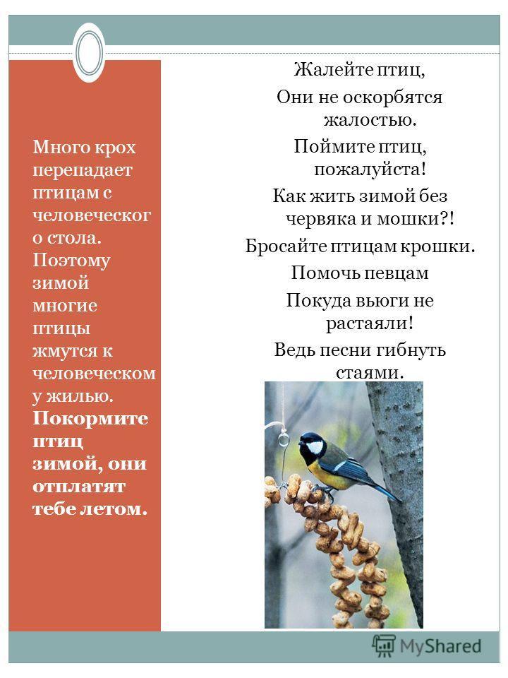 Много крох перепадает птицам с человеческого стола. Поэтому зимой многие птицы жмутся к человеческом у жилью. Покормите птиц зимой, они отплатят тебе летом. Жалейте птиц, Они не оскорбятся жалостью. Поймите птиц, пожалуйста! Как жить зимой без червяк