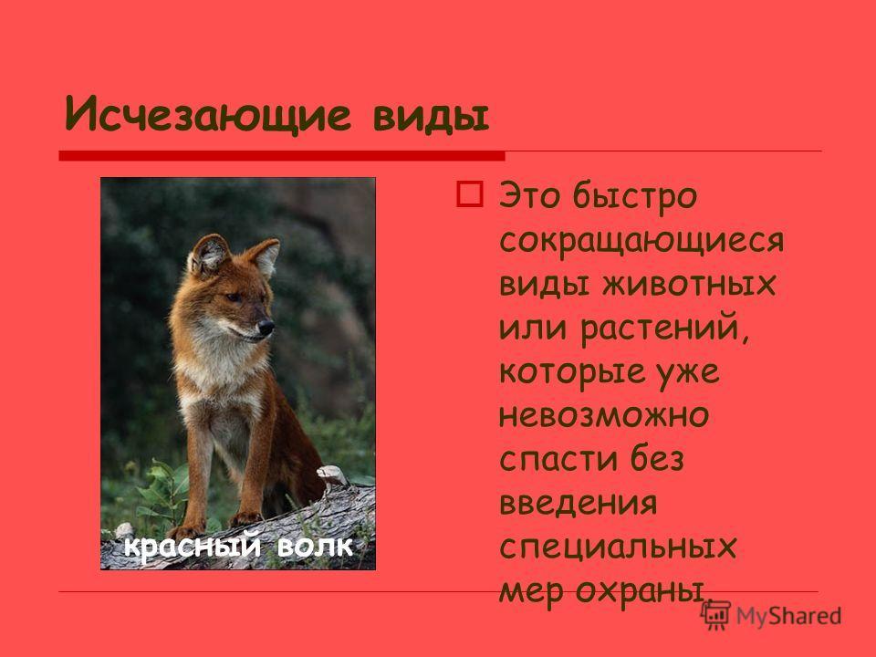 Классификация растений и животных Исчезающие виды Малочисленные виды Редкие виды Малоизученные виды Восстанавливающиеся виды
