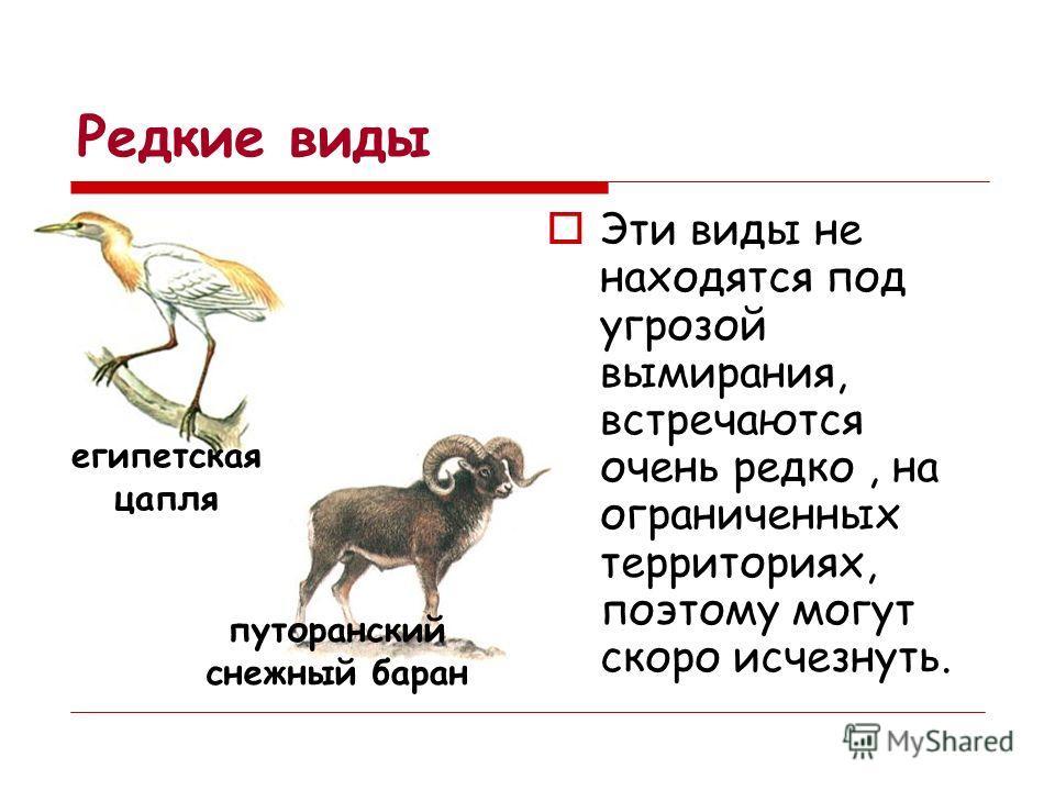 Малочисленные виды Эти виды встречаются в количествах достаточных для выживания, но их численность очень быстро сокращается. розовый пеликан даурский ёж