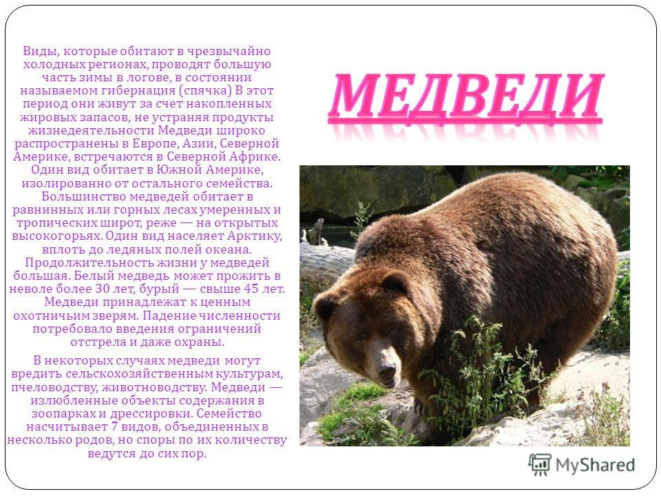 МЕДВЕДИ Виды, которые обитают в чрезвычайно холодных регионах, проводят большую часть зимы в логове, в состоянии называемом гибернация ( спячка ) В этот период они живут за счет накопленных жировых запасов, не устраняя продукты жизнедеятельности Медв