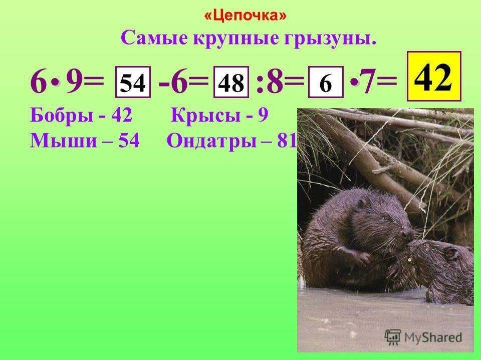 «Цепочка» Самые крупные грызуны. 6 9= -6= :8= 7= Бобры - 42 Крысы - 9 Мыши – 54 Ондатры – 81 54486 42