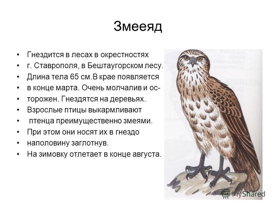 Змееяд Гнездится в лесах в окрестностях г. Ставрополя, в Бештаугорском лесу. Длина тела 65 см.В крае появляется в конце марта. Очень молчалив и осторожен. Гнездятся на деревьях. Взрослые птицы выкармливают птенца преимущественно змеями. При этом они