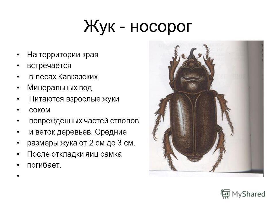 Жук - носорог На территории края встречается в лесах Кавказских Минеральных вод. Питаются взрослые жуки соком поврежденных частей стволов и веток деревьев. Средние размеры жука от 2 см до 3 см. После откладки яиц самка погибает.