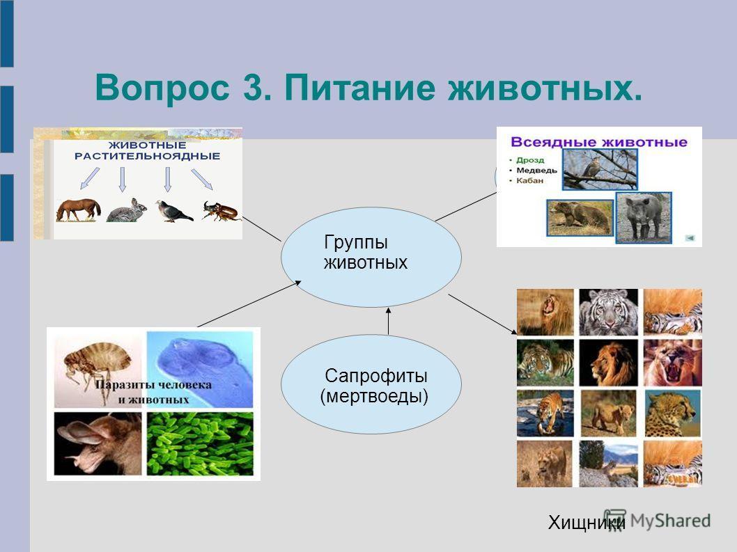 Вопрос 3. Питание животных. Сапрофиты (мертвоеды) Растительноядные Всеядные Паразиты Группы животных Хищники