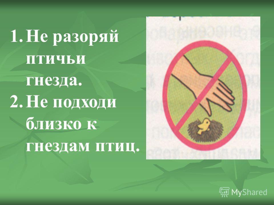 1. Не разоряй птичьи гнезда. 2. Не подходи близко к гнездам птиц.