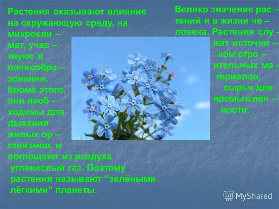 Растения оказывают влияние на окружающую среду, на микроклимат, участвуют в почвообразовании. Кроме этого, они необходимы для дыхания живых организмов, и поглощают из воздуха углекислый газ. Поэтому растения называют зелёными лёгкими планеты. Велико