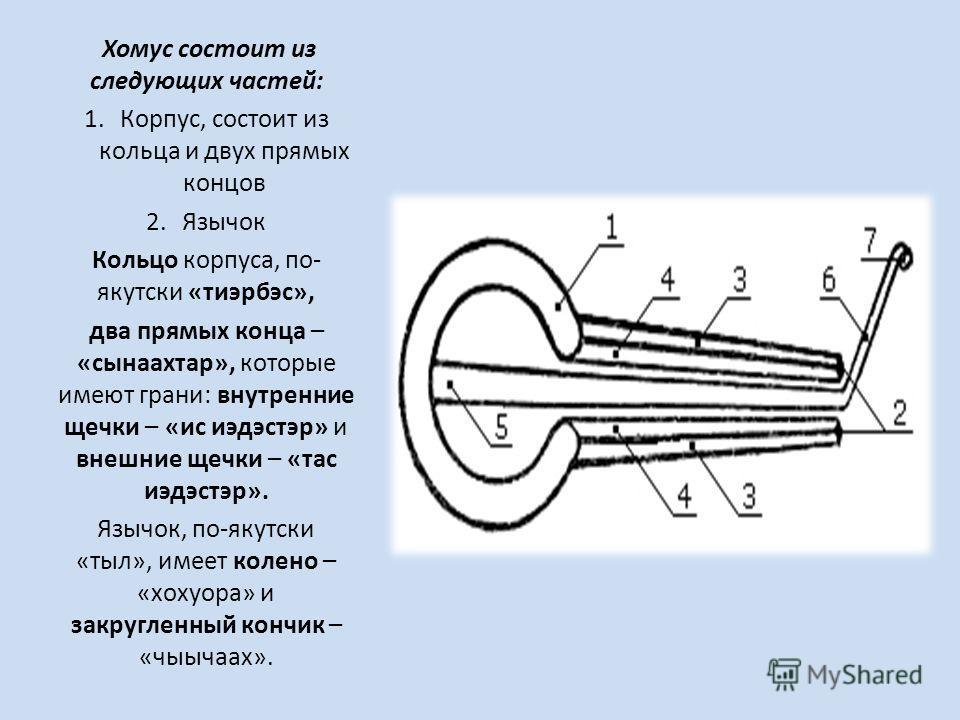 Хомус состоит из следующих частей: 1.Корпус, состоит из кольца и двух прямых концов 2. Язычок Кольцо корпуса, по- якутски «тиэрбэс», два прямых конца – «сынаахтар», которые имеют грани: внутренние щечки – «ис иэдэстэр» и внешние щечки – «тасс иэдэстэ