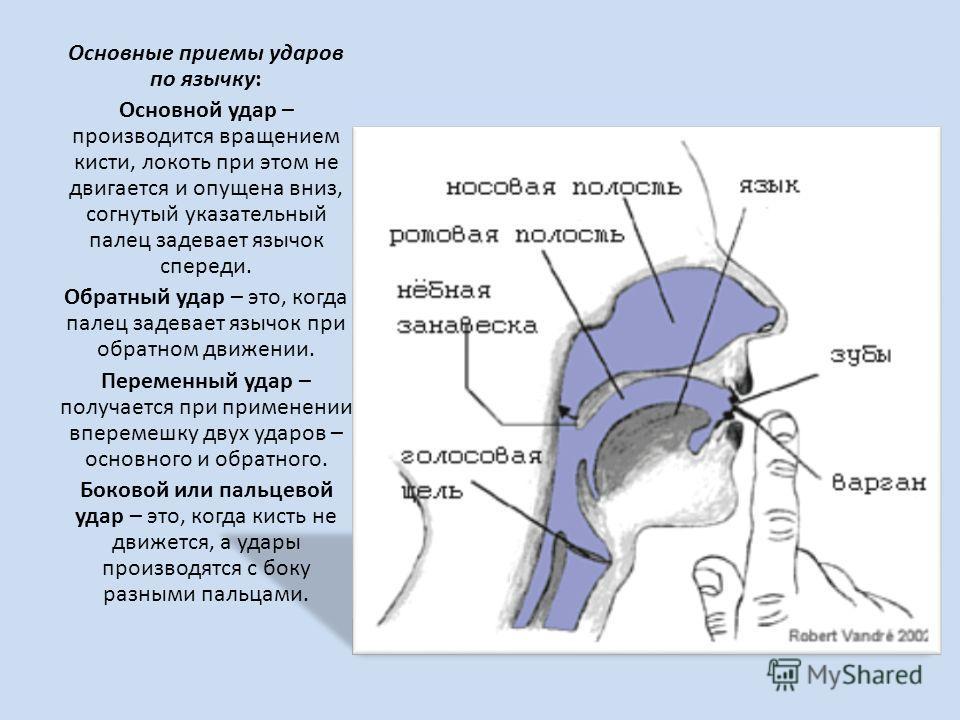 Основные приемы ударов по язычку: Основной удар – производится вращением кисти, локоть при этом не двигается и опущена вниз, согнутый указательный палец задевает язычок спереди. Обратный удар – это, когда палец задевает язычок при обратном движении.