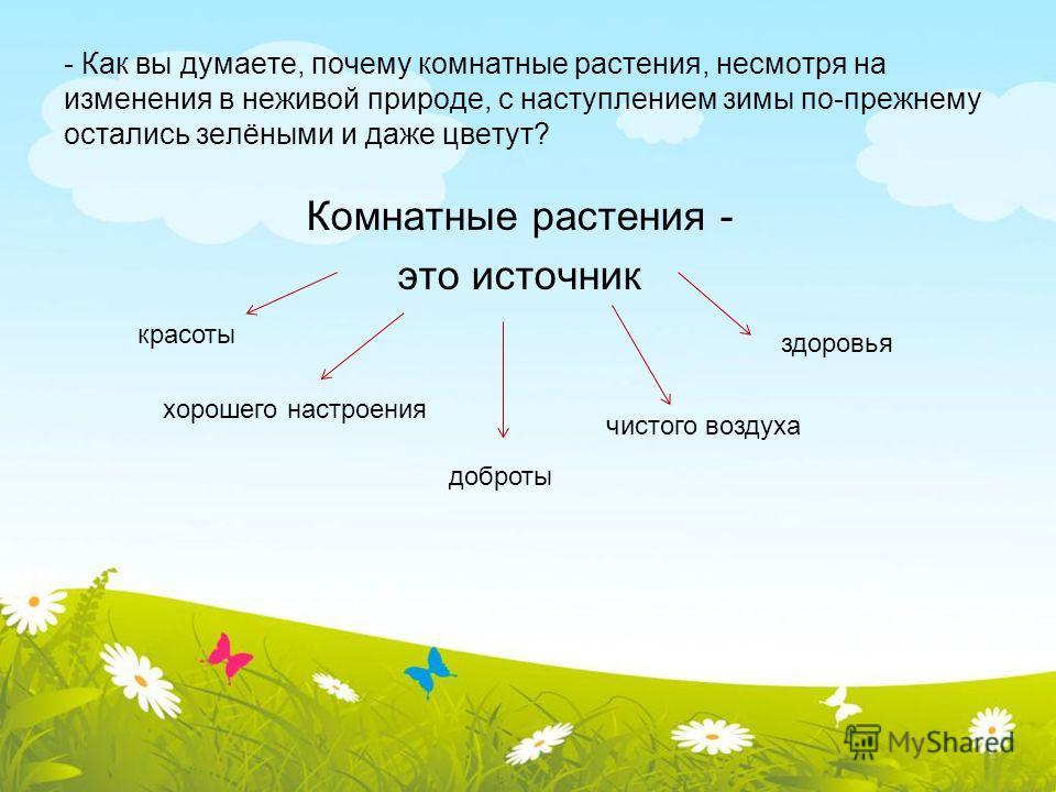 - Как вы думаете, почему комнатные растения, несмотря на изменения в неживой природе, с наступлением зимы по-прежнему остались зелёными и даже цветут? Комнатные растения - это источник красоты хорошего настроения доброты чистого воздуха здоровья
