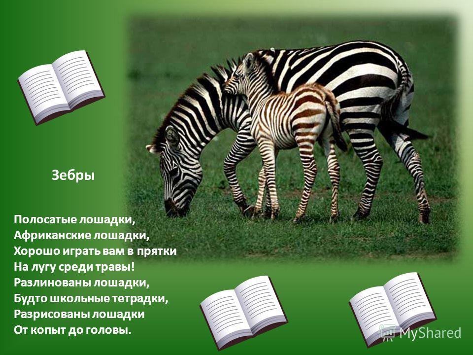 Полосатые лошадки, Африканские лошадки, Хорошо играть вам в прятки На лугу среди травы! Разлинованы лошадки, Будто школьные тетрадки, Разрисованы лошадки От копыт до головы. Зебры