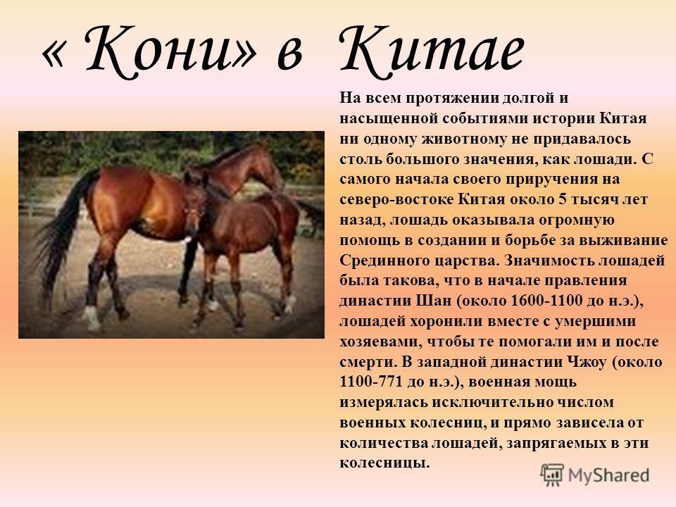 « Кони» в Китае На всем протяжении долгой и насыщенной событиями истории Китая ни одному животному не придавалось столь большого значения, как лошади. С самого начала своего приручения на северо-востоке Китая около 5 тысяч лет назад, лошадь оказывала