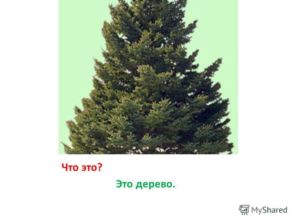 Что это? Это дерево.